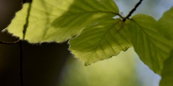 Natur_1_600